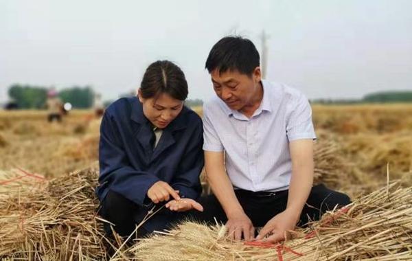"""小麦亩产达1600斤 宝丰县农民终圆""""良种梦"""""""