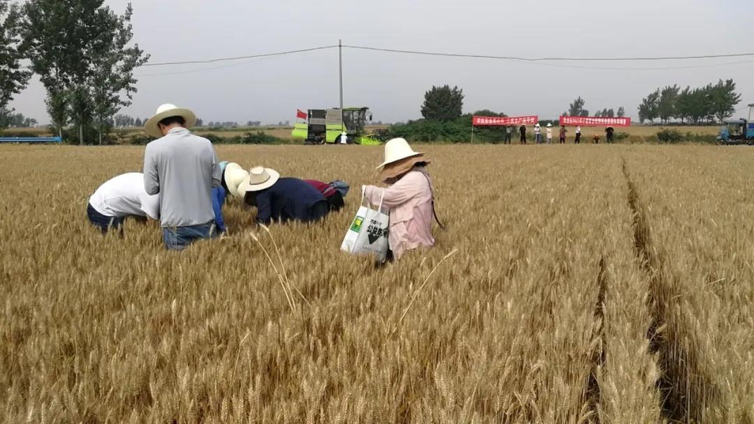 南阳卧龙区:机收减损 确保小麦归仓