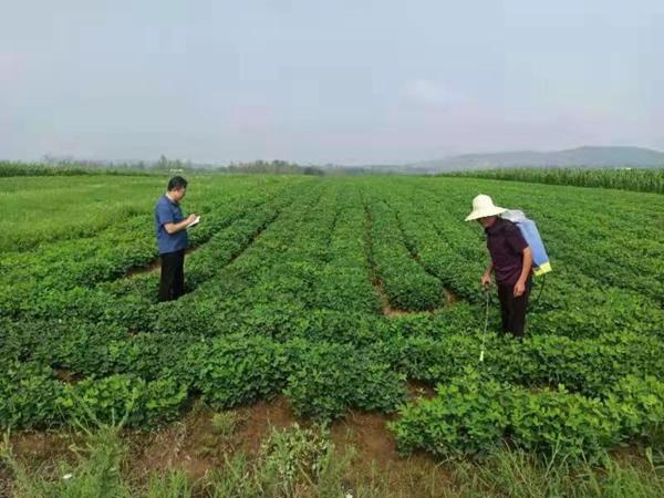 叶县:高标准农田保障 护航高产稳产