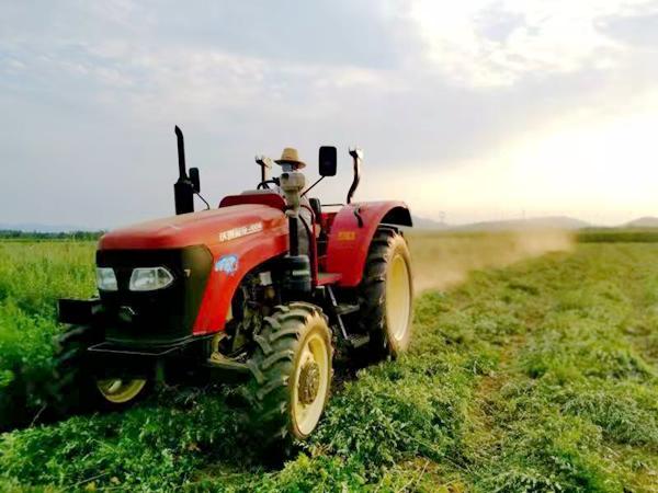 叶县:因地制宜种艾草 农户、集体都赚钱