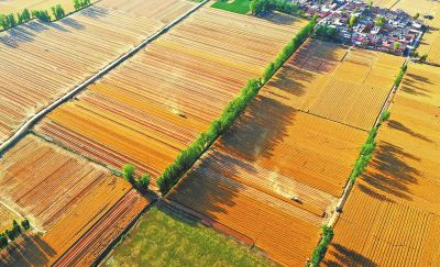 1365.16亿斤!河南粮食总产量首次跨越1350亿斤台阶